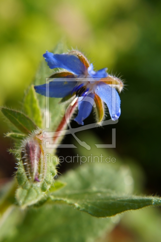 freely selectable image excerpt for your image on Acrylic