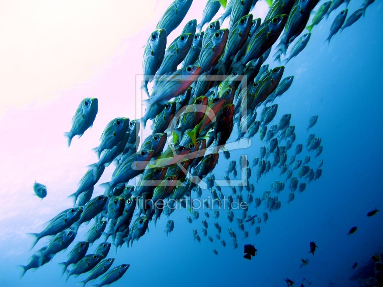 Fisch- Schwarm as a canvas print 10929797 | Fine Art ...