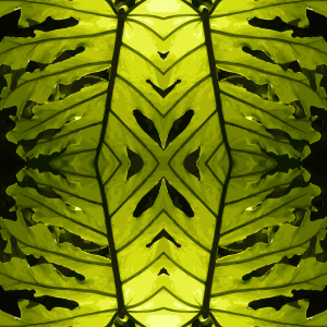 Picture no: 9001006 Monstera Grün Created by: patterndesigns-com