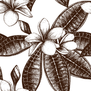 Picture no: 9007863 Frangipani Sketch Created by: patterndesigns-com