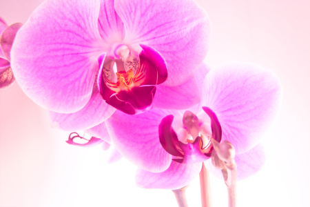 Picture no: 9296163 Orchidee Created by: diedinel