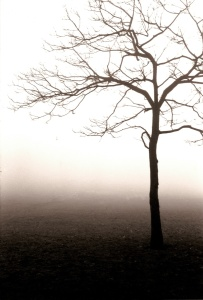 Picture no: 9313108 Dichter Nebel im Park Created by: analog