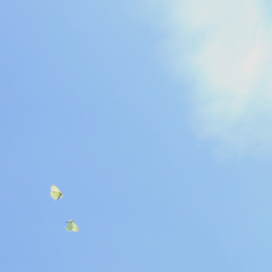 Picture no: 9324994 Butterflies in the sky Created by: yammay