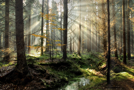 Picture no: 9407240 Sonne im Wald Created by: PeterTost
