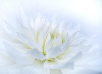 Picture no: 9407344 White and Soft Created by: Bluemoon