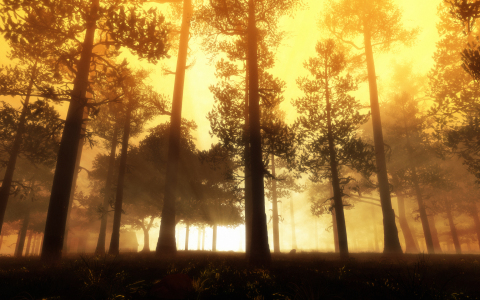 Picture no: 9408714 Herbstwald Created by: magann