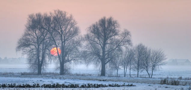Picture no: 9412130 Sonne im Frost Created by: PeterTost