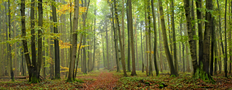 Picture no: 9414290 Herbstwald Created by: PeterTost