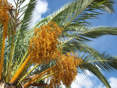 Picture no: 9420932 Palmtree to Heaven Created by: Marion227