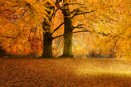 Picture no: 9432756 Herbst wd263 Created by: Dreblow