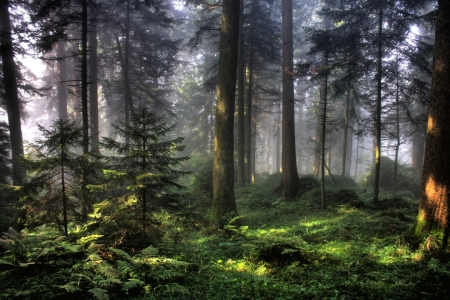 Picture no: 9506356 Mystischer Wald Created by: martinvalk