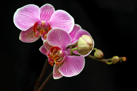 Picture no: 9520542 Orchideenpracht Created by:  Heidi  Brausch