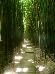 Picture no: 9542718 Bamboo Forest Created by: kerstin783