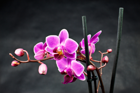 Picture no: 9585046 Orchidee Created by: Rico Ködder