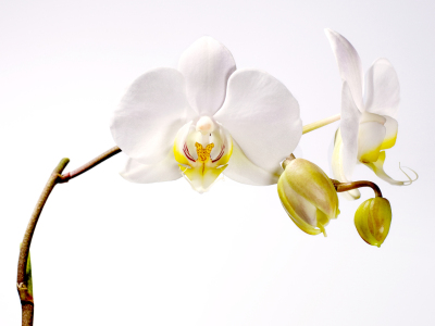 Picture no: 9599328 Orchidee Created by: Nailia Schwarz