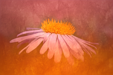Picture no: 9692072 Echinacea Created by: Daniela Beyer