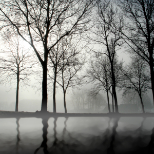 Picture no: 9771944 NEBEL Created by: yammay