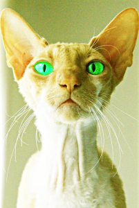Picture no: 9790890 Sphynx cat Created by: stadel83