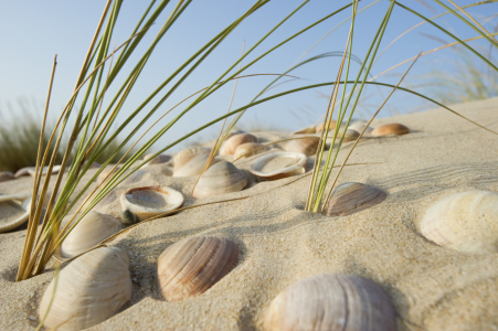 Picture no: 9790960 neulich am Strand 6 Created by: danielschoenen