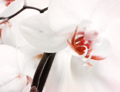 Picture no: 9835146 ORCHIDEE  Created by: Galerie-Fotoeffekt