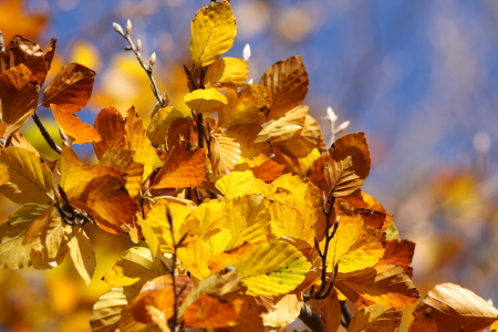 Picture no: 9842268 Herbstfarben Created by: FotoDeHRO