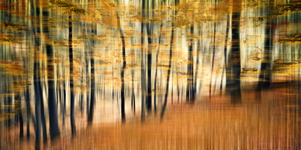 Picture no: 9846310 Fragment Forest | 01 Created by: Frank Wächter