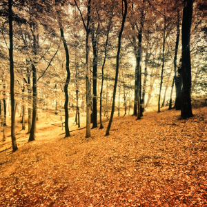 Picture no: 9850806 Herbstwald | 02 Created by: Frank Wächter