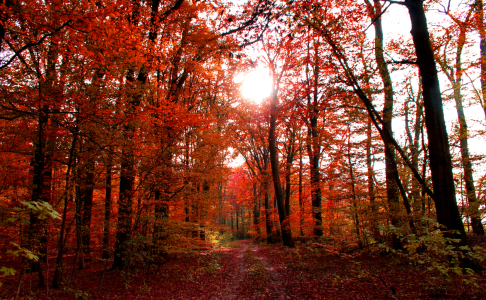 Picture no: 9855360 Herbstwald Created by: Pixelboy