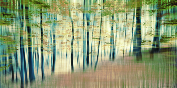 Picture no: 9855578 Fragment Forest | 03 Created by: Frank Wächter