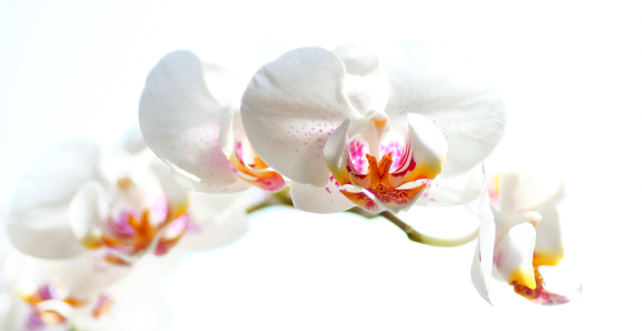 Picture no: 9929338 Orchideen Created by: Jana Behr