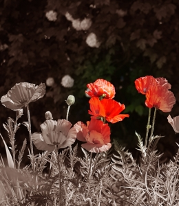 Picture no: 9954813 MOHN Created by: CRAZYHAWK
