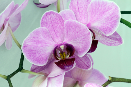 Picture no: 9957295 Orchidee Created by: Gerhard Albicker