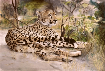 Picture no: 9967977 ruhender Gepard Created by: suender-artworks