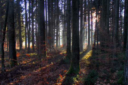 Picture no: 9976801 Im Wald Created by: Gerhard Albicker