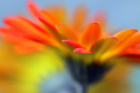 Picture no: 9996861 Sonnige Gerbera Created by: Renate Knapp