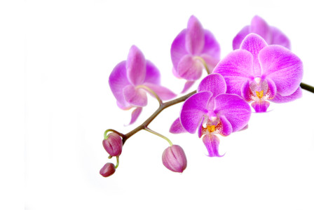 Picture no: 9998529 Orchidee Created by: hannes cmarits
