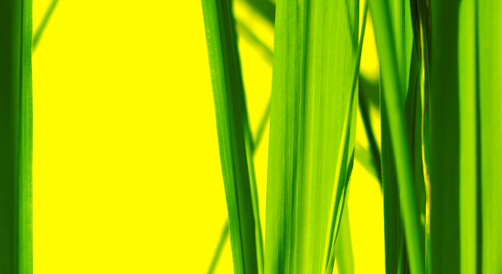 Picture no: 10011925 yellow green Created by: Gerhard Fechtig
