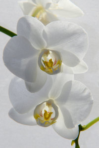 Picture no: 10020973 Orchideen Created by: Eileen Kumpf