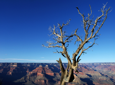 Picture no: 10031323 Grand Canyon mit Baumgerippe Created by: Buellom