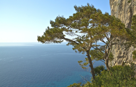 Picture no: 10035323 Baum am Meer Capri Italien Created by: Rene Müller