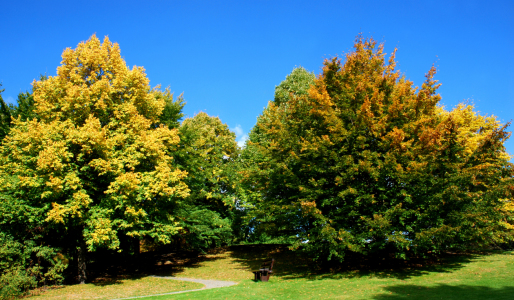 Picture no: 10039661 Herbst im Park Created by: Atteloi