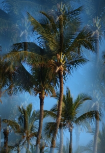 Picture no: 10053285 i like palm trees Created by: Michael Ruß