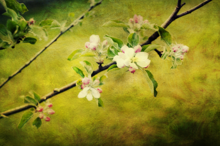 Picture no: 10057921 Duettwerk - apple blossom Created by: Timo Geble