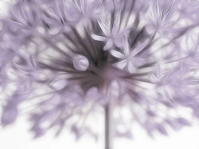 Picture no: 10085581 Allium II Created by: Gisela Baiker
