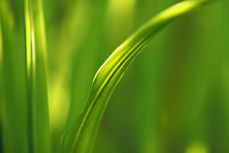 Picture no: 10085647 Gras is green Created by: Eileen Kumpf