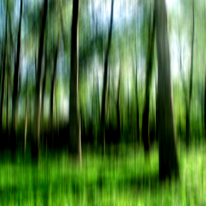 Picture no: 10092466 Der Wald Created by: yammay
