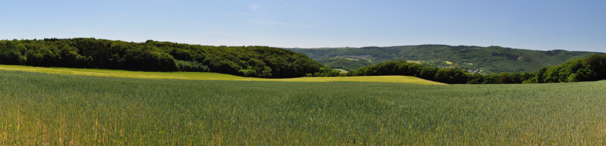 Picture no: 10099756 Weizenfeld-Panorama (4) Created by: Erhard Hess