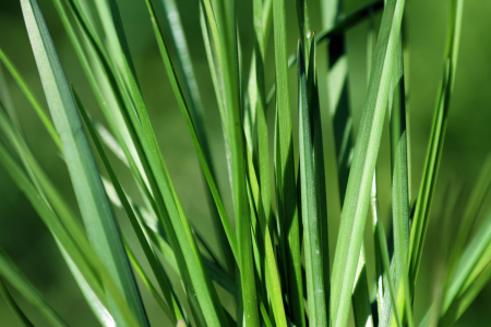 Picture no: 10110734 Gras Created by: Gerhard Albicker
