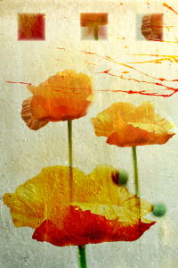 Picture no: 10122152 Mohn Impression Created by: Galerie-Fotoeffekt
