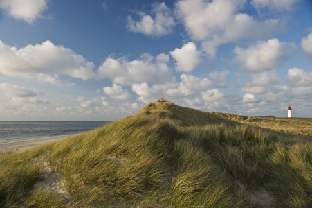 Picture no: 10142370 Sylt #54 Created by: danielschoenen